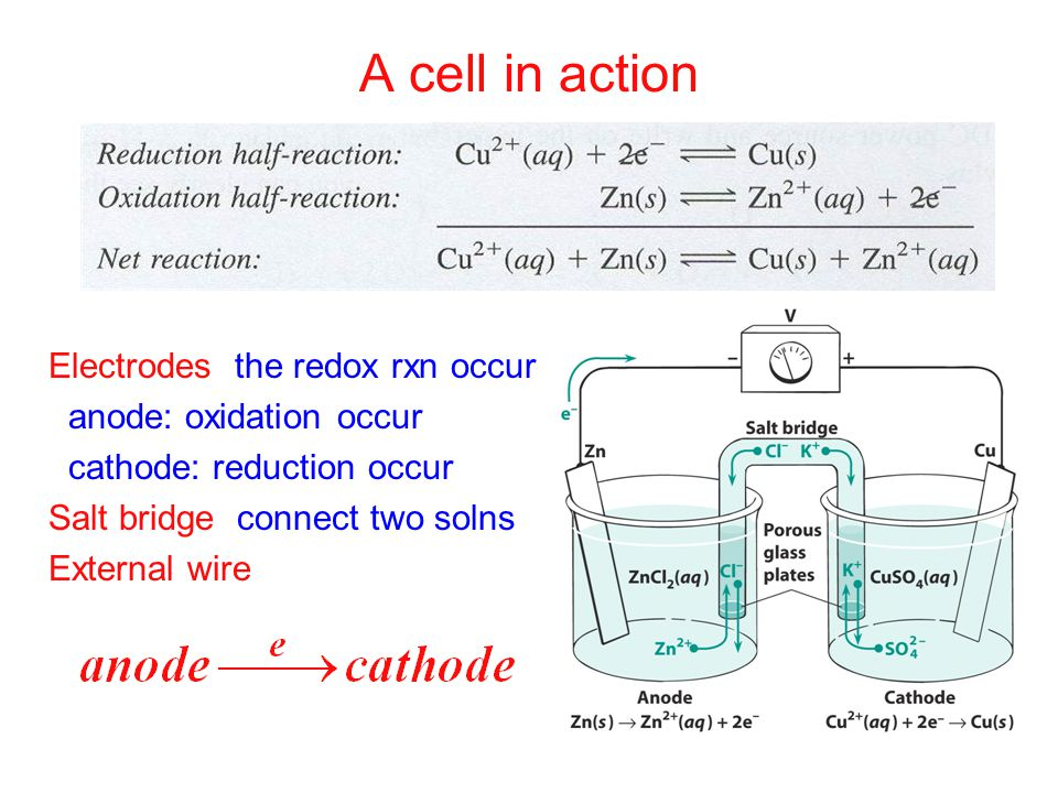 A cell in action Electrodes: the redox rxn occur