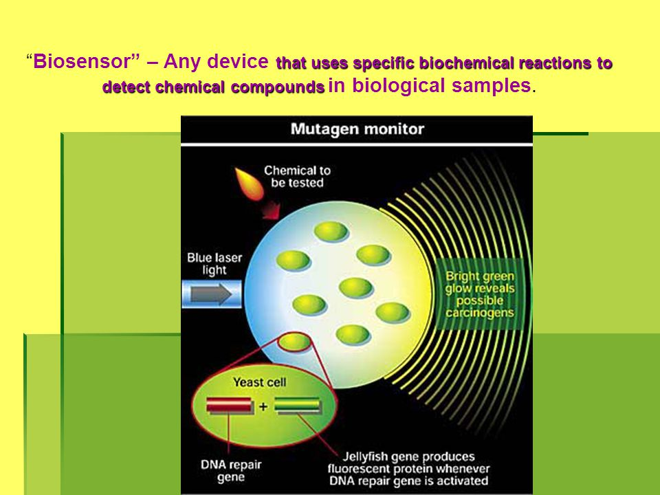 Biosensor – Any device that uses specific biochemical reactions to detect chemical compounds in biological samples.