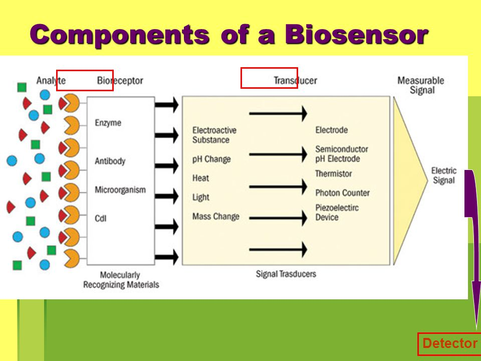 Components of a Biosensor