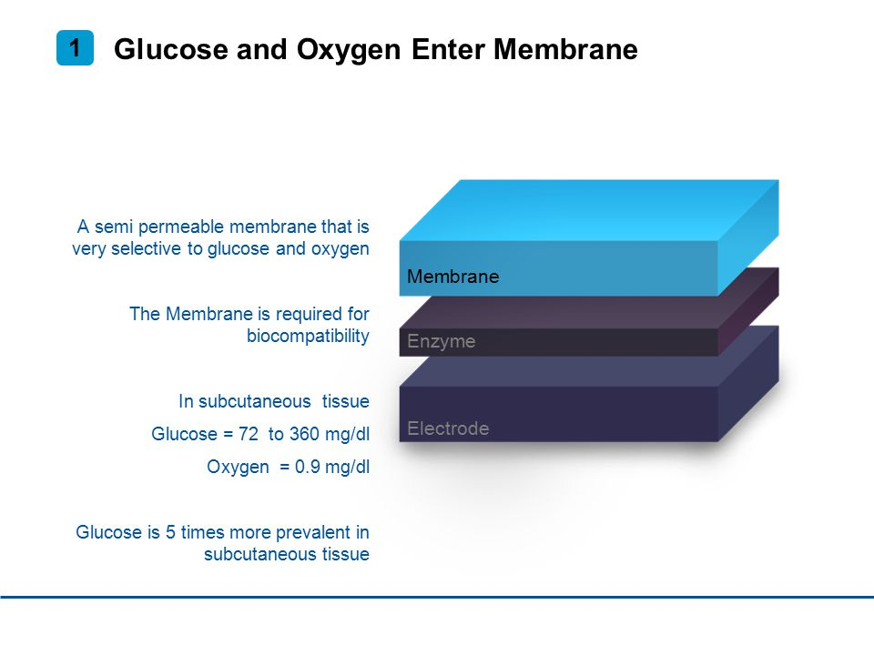 Glucose and Oxygen Enter Membrane