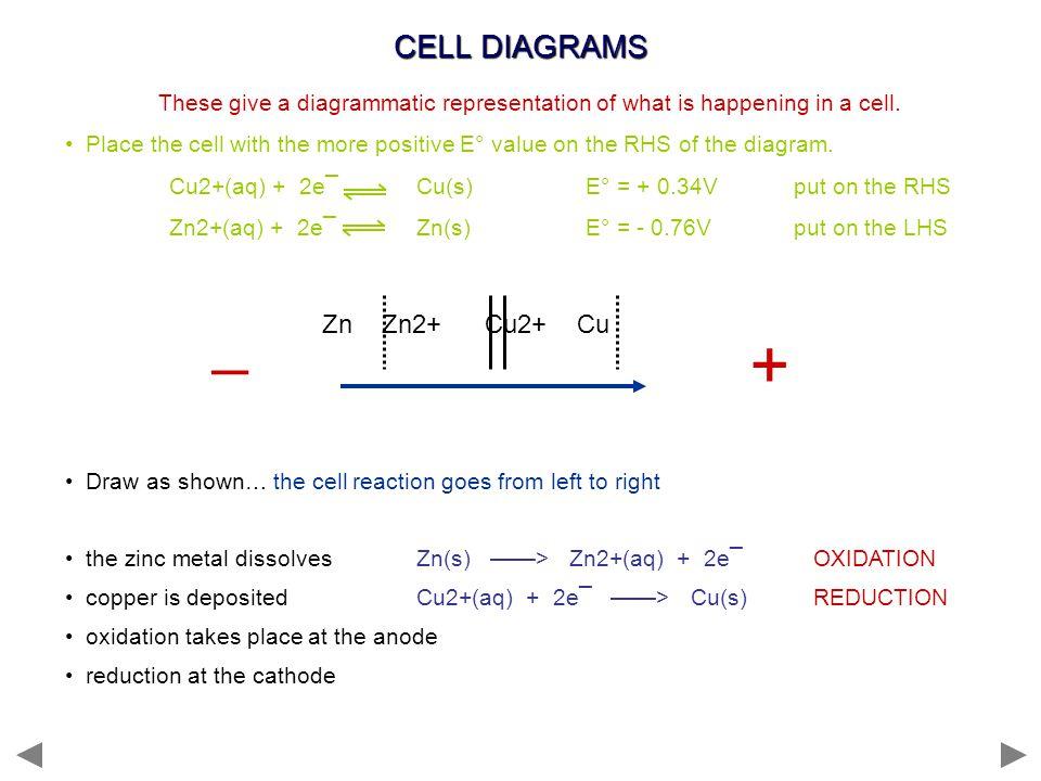 + _ CELL DIAGRAMS Zn Zn2+ Cu2+ Cu