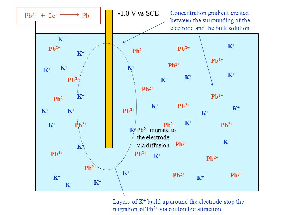 Pb2+ + 2e- Pb -1.0 V vs SCE. Concentration gradient created between the surrounding of the electrode and the bulk solution.