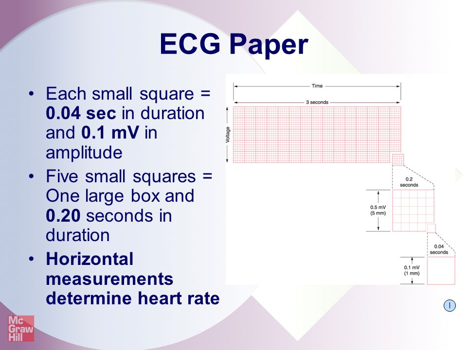 ECG Paper Each small square = 0.04 sec in duration and 0.1 mV in amplitude. Five small squares = One large box and 0.20 seconds in duration.