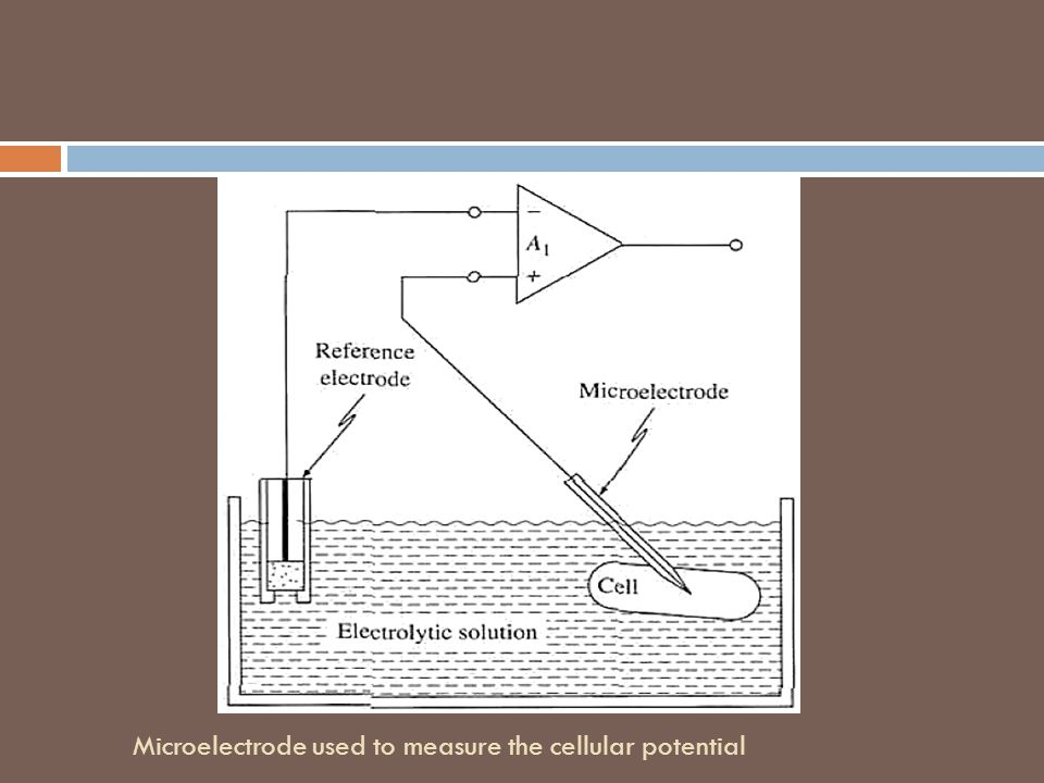 Microelectrode used to measure the cellular potential