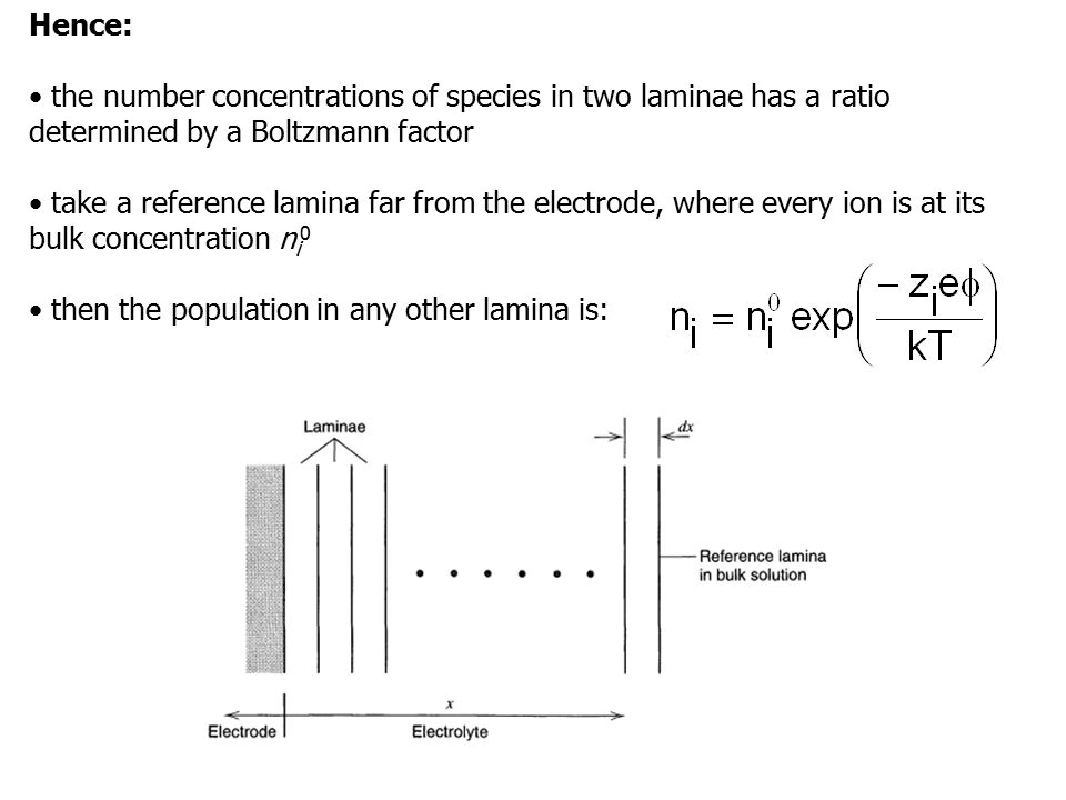 Hence: • the number concentrations of species in two laminae has a ratio determined by a Boltzmann factor.