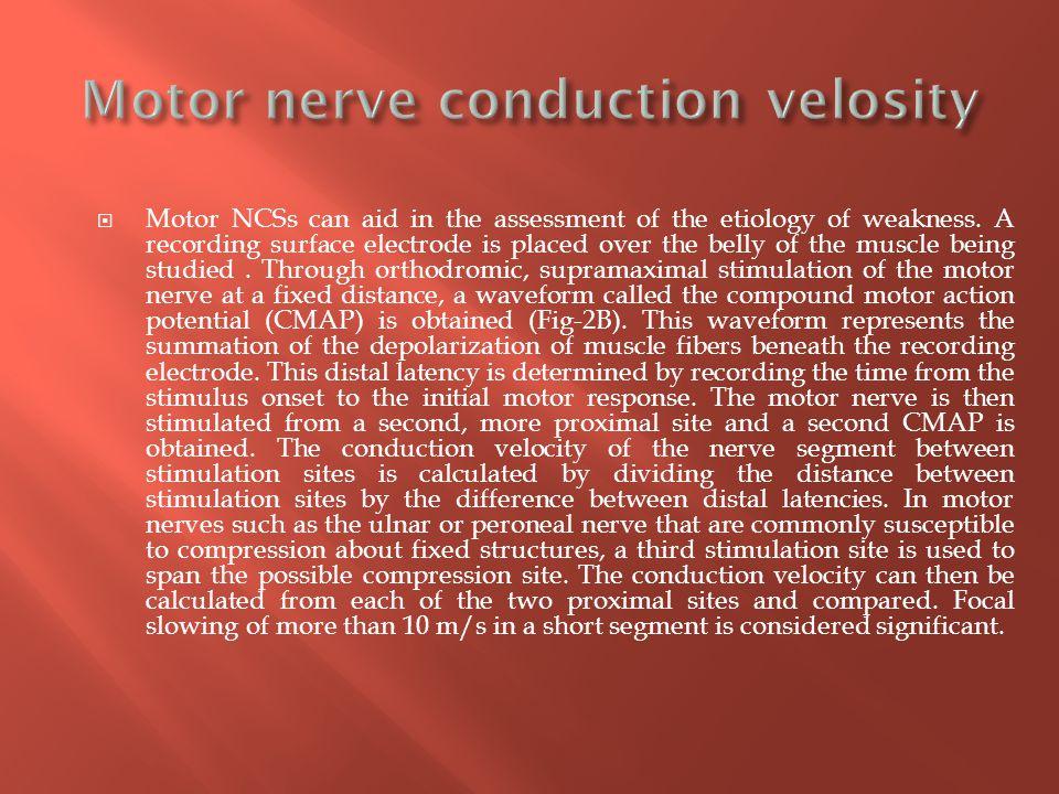 Motor nerve conduction velosity