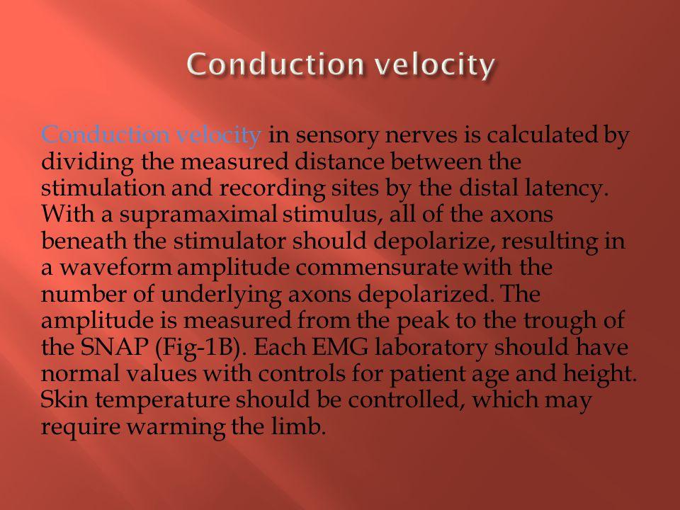 Conduction velocity