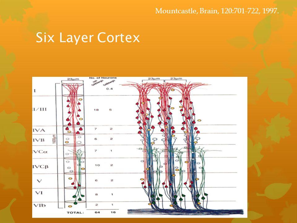 Mountcastle, Brain, 120:701-722, 1997. Six Layer Cortex