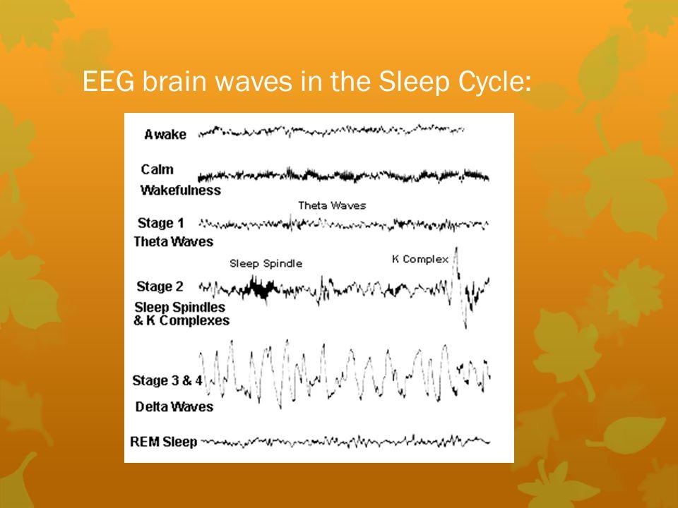 EEG brain waves in the Sleep Cycle: