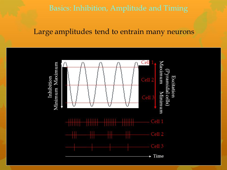 Large amplitudes tend to entrain many neurons