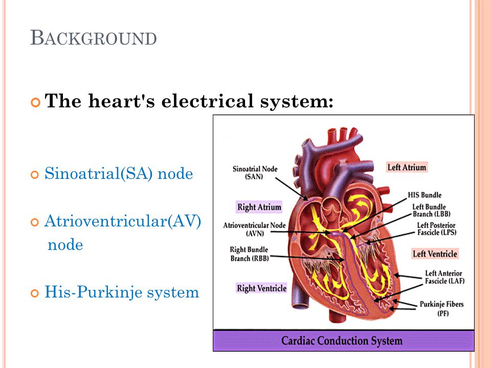 Background The heart s electrical system: Sinoatrial(SA) node