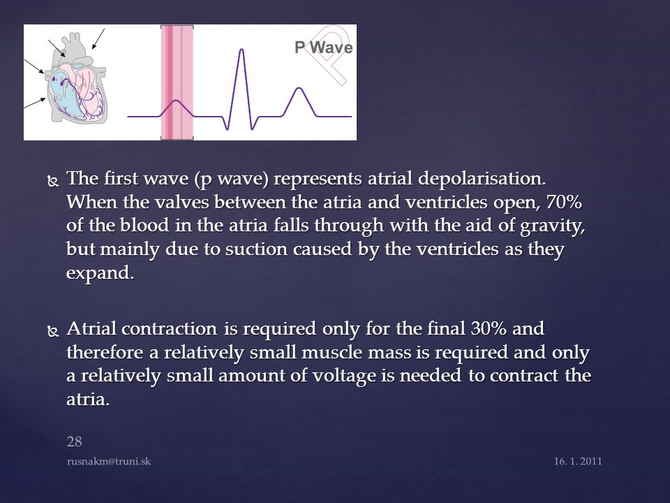The first wave (p wave) represents atrial depolarisation