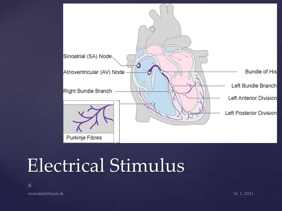 Electrical Stimulus rusnakm@truni.sk 16. 1. 2011