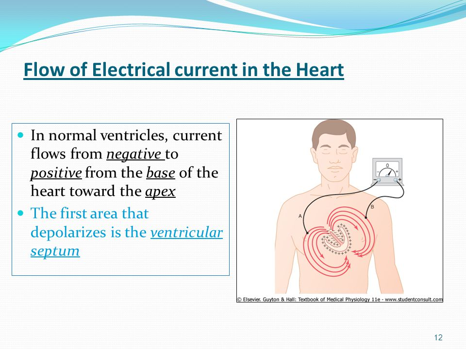 Flow of Electrical current in the Heart
