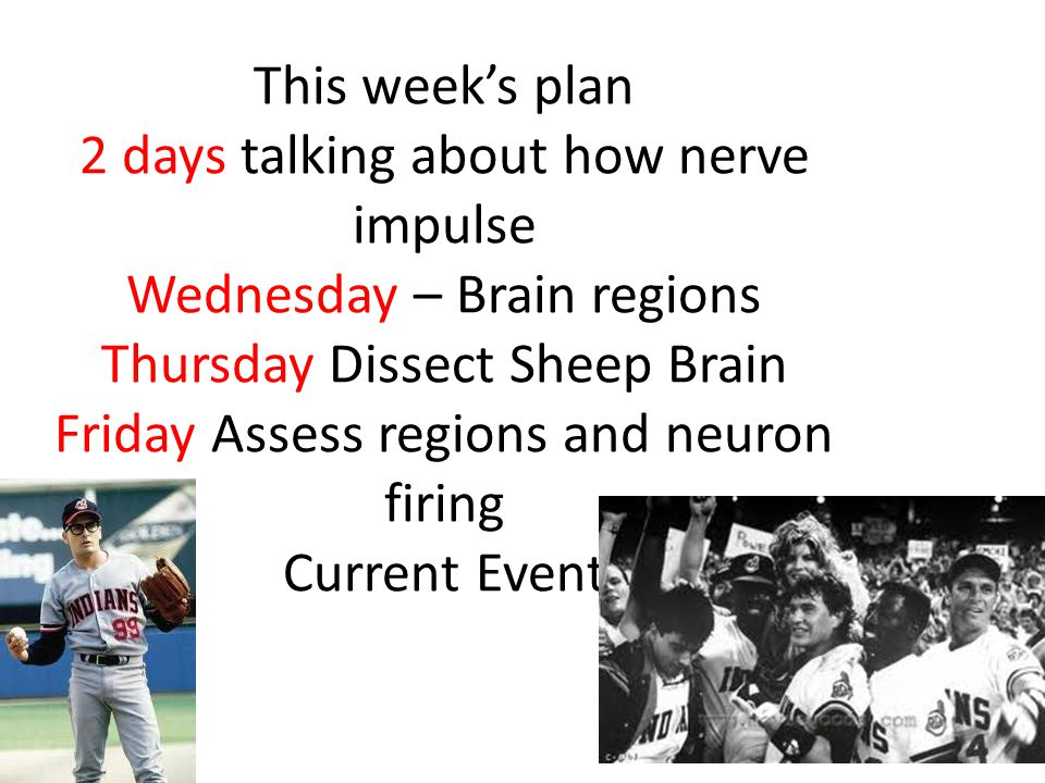 This week's plan 2 days talking about how nerve impulse Wednesday – Brain regions Thursday Dissect Sheep Brain Friday Assess regions and neuron firing Current Event