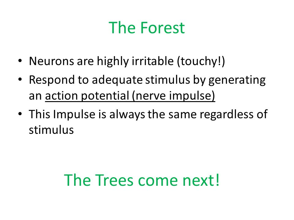 The Forest The Trees come next! Neurons are highly irritable (touchy!)
