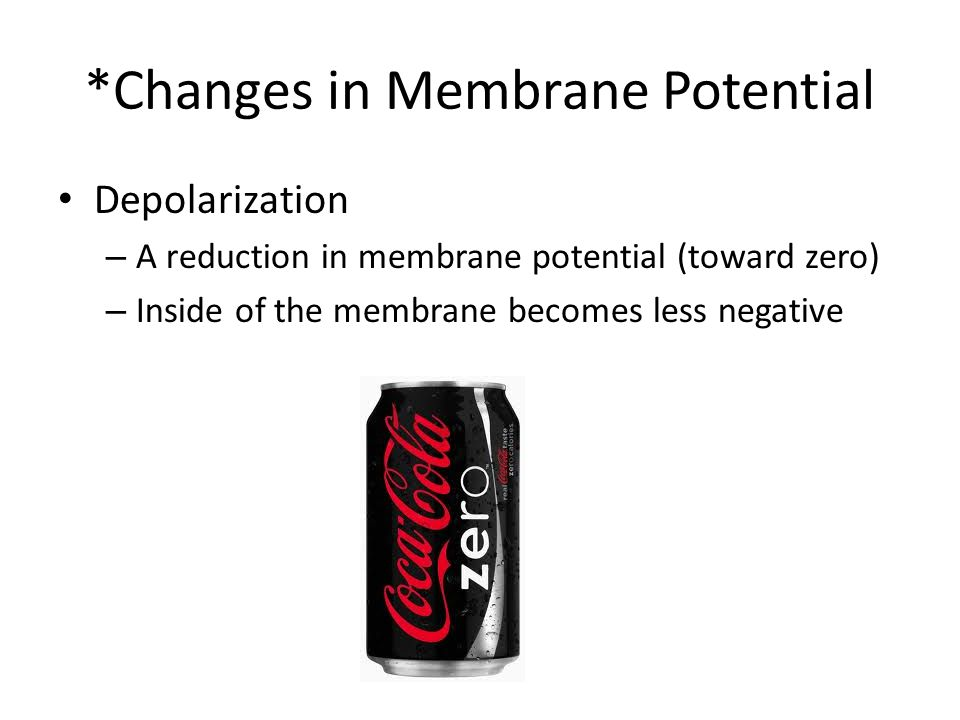 *Changes in Membrane Potential