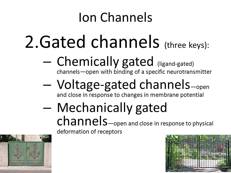 Gated channels (three keys):