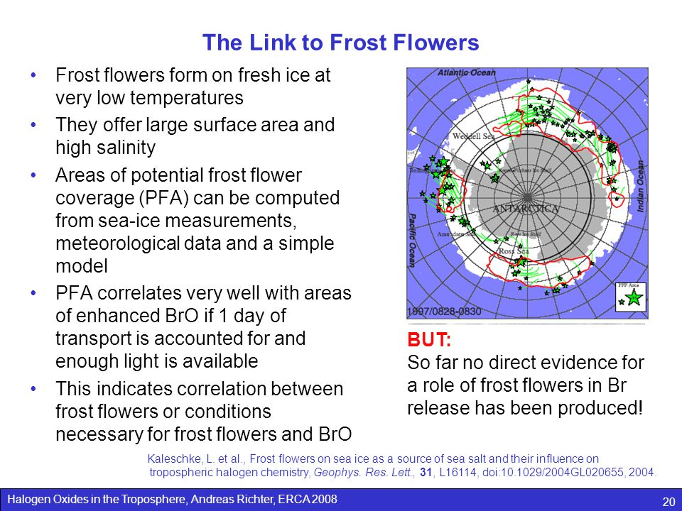 The Link to Frost Flowers