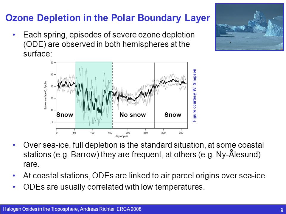 Ozone Depletion in the Polar Boundary Layer