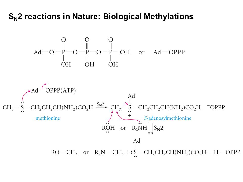 SN2 reactions in Nature: Biological Methylations