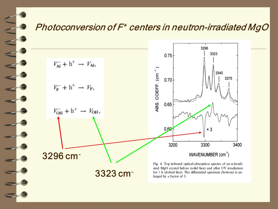Photoconversion of F+ centers in neutron-irradiated MgO