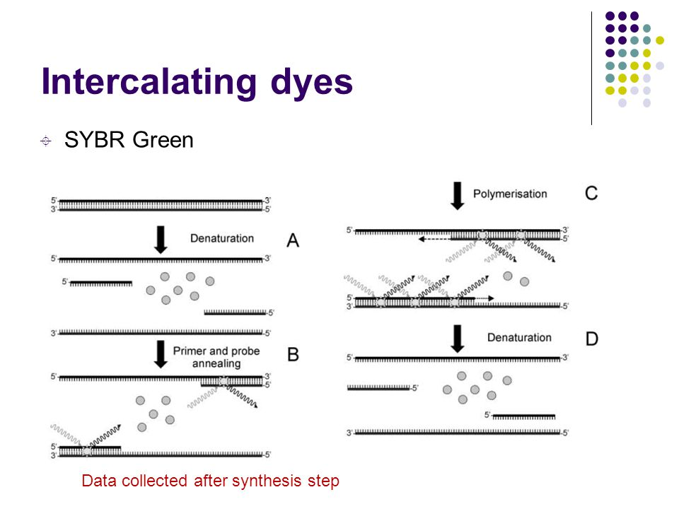 Intercalating dyes SYBR Green Data collected after synthesis step 12