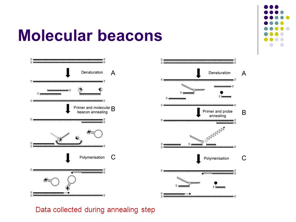 Molecular beacons Data collected during annealing step 16