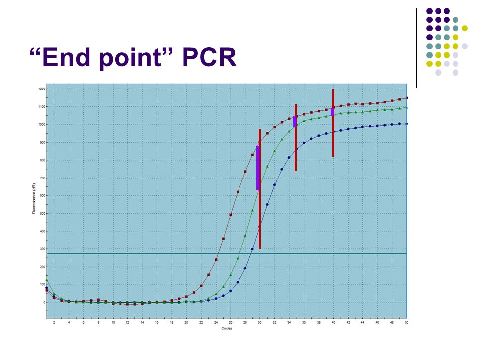 End point PCR 7