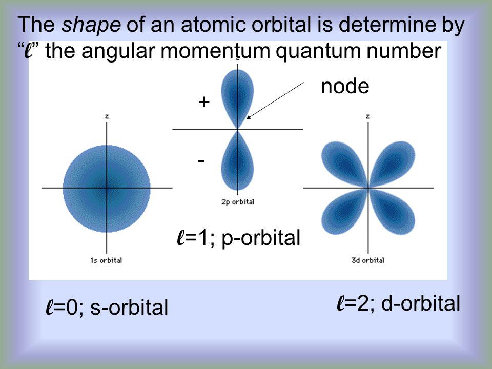 The shape of an atomic orbital is determine by l the angular momentum quantum number