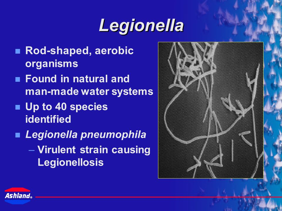 Legionella Rod-shaped, aerobic organisms