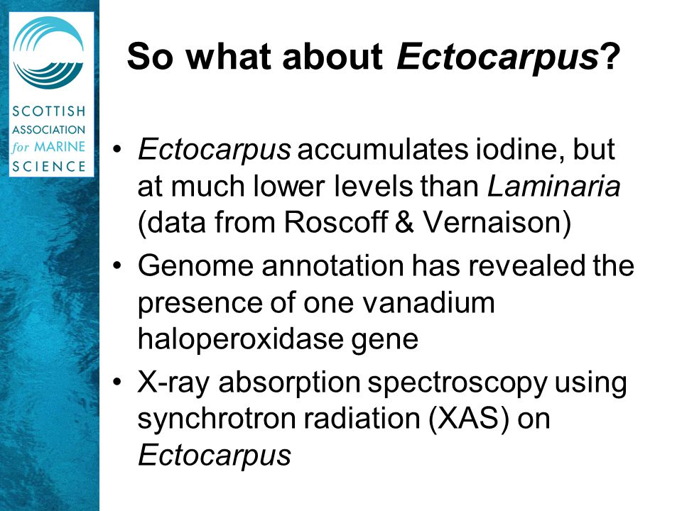 So what about Ectocarpus