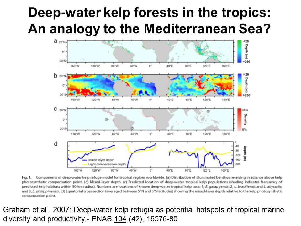 Deep-water kelp forests in the tropics: An analogy to the Mediterranean Sea