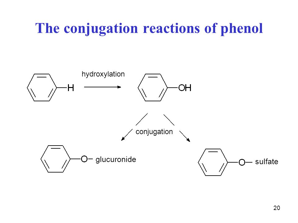 The conjugation reactions of phenol