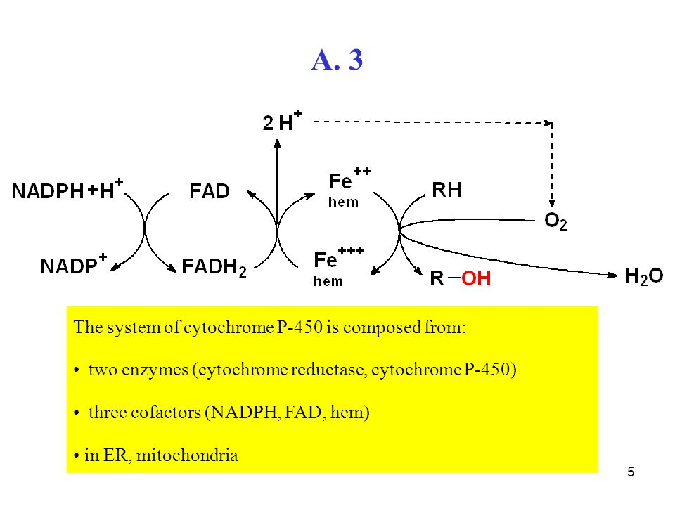 A. 3 The system of cytochrome P-450 is composed from: