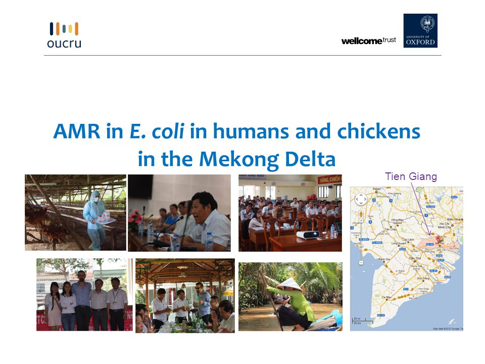 AMR in E. coli in humans and chickens in the Mekong Delta