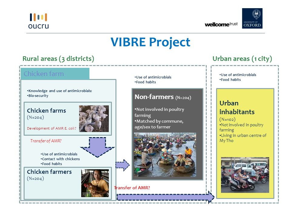 VIBRE Project Rural areas (3 districts) Urban areas (1 city)