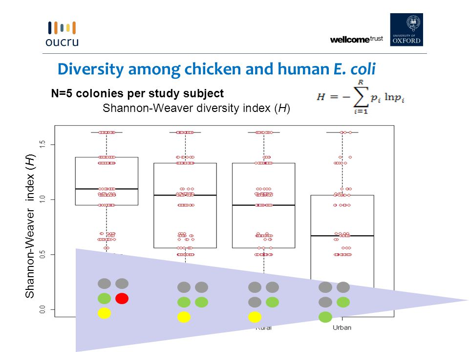 Diversity among chicken and human E. coli