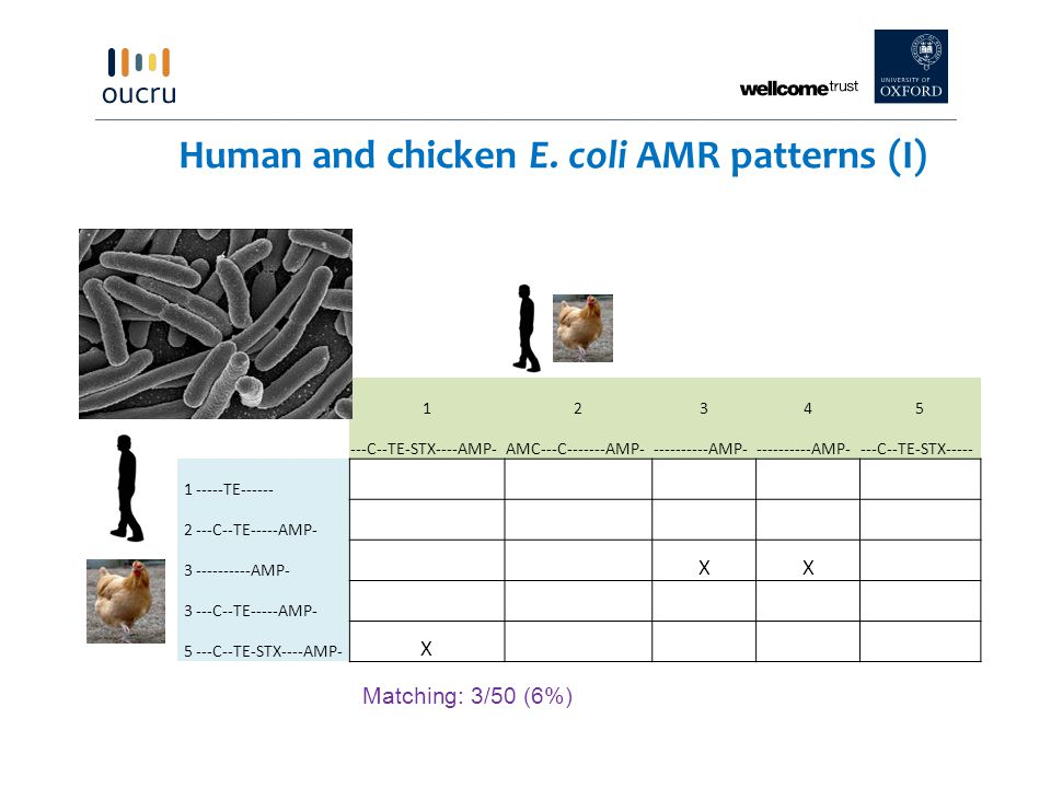 Human and chicken E. coli AMR patterns (I)