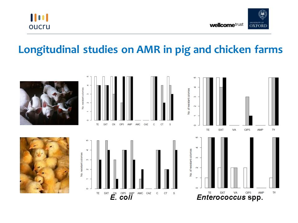 Longitudinal studies on AMR in pig and chicken farms