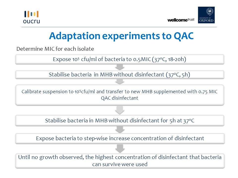 Adaptation experiments to QAC