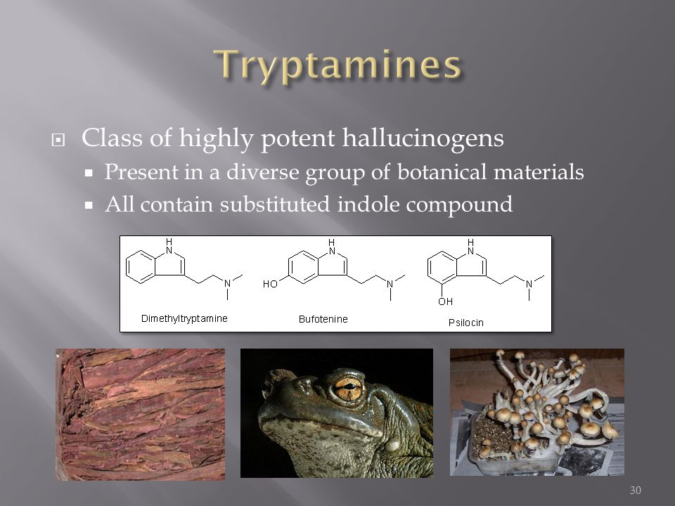 Tryptamines Class of highly potent hallucinogens