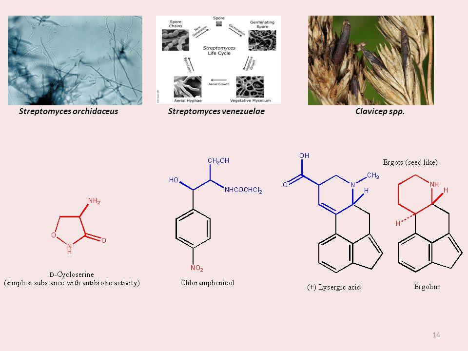 Streptomyces orchidaceus Streptomyces venezuelae