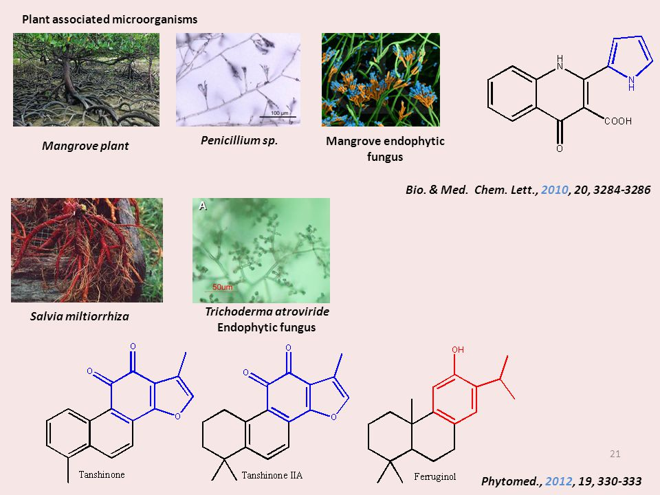Plant associated microorganisms Trichoderma atroviride