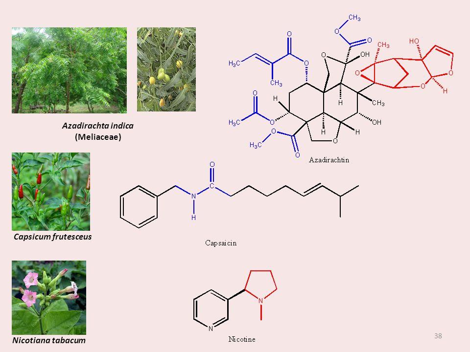 Azadirachta indica (Meliaceae) Capsicum frutesceus Nicotiana tabacum