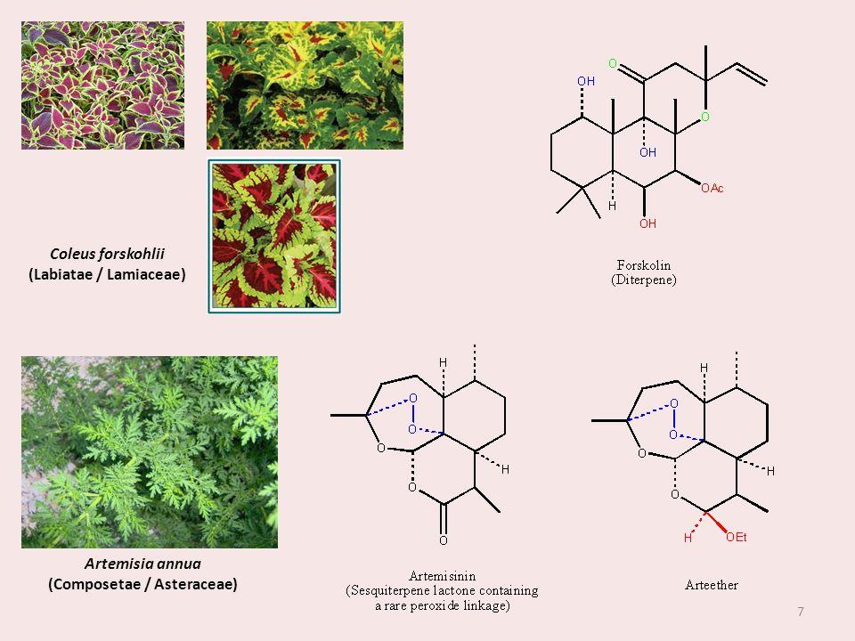 (Labiatae / Lamiaceae) (Composetae / Asteraceae)