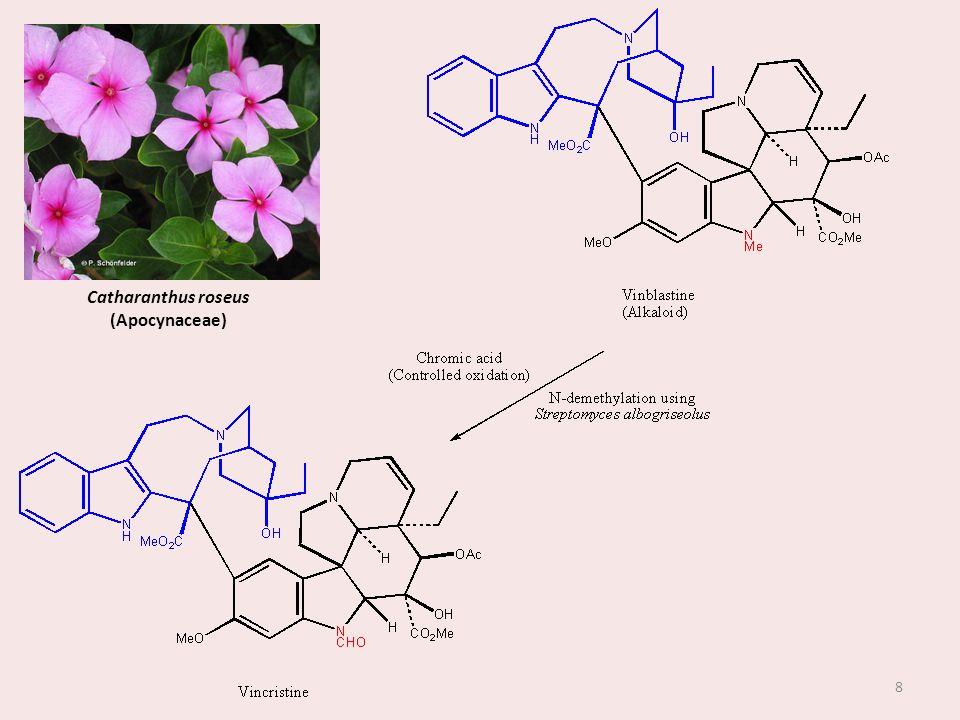 Catharanthus roseus (Apocynaceae)