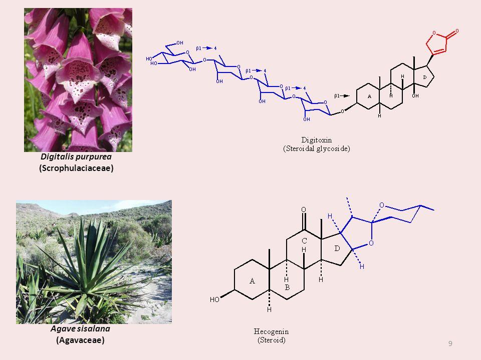 Digitalis purpurea (Scrophulaciaceae) Agave sisalana (Agavaceae)