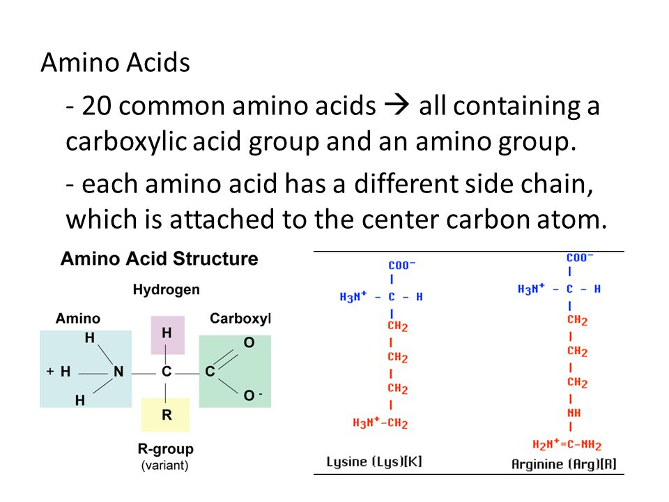 Amino Acids - 20 common amino acids  all containing a carboxylic acid group and an amino group.