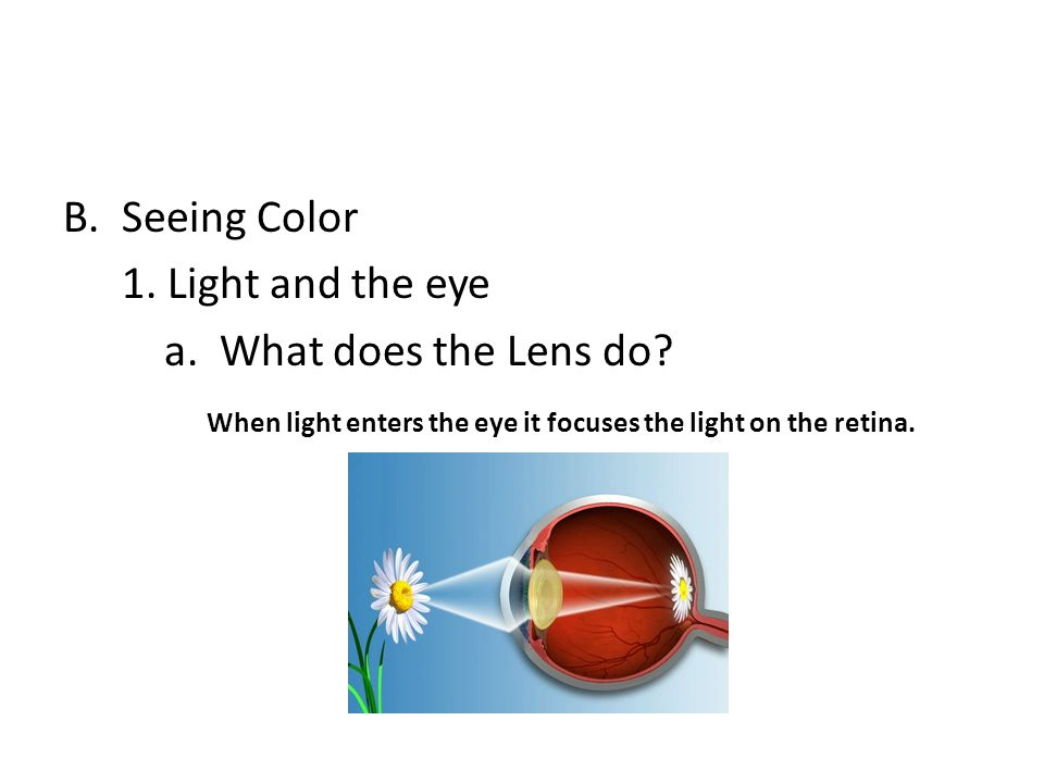 Seeing Color 1. Light and the eye. a. What does the Lens do.
